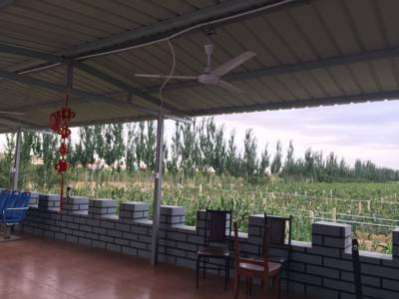 Shapotou Zijing Grapes Farm Stay
